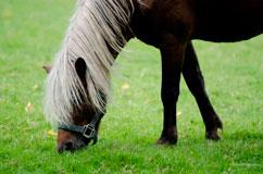 Undeklariertes Pferdefleisch in Tschechien?