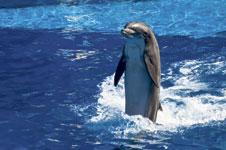 Streit um Delfin-Show