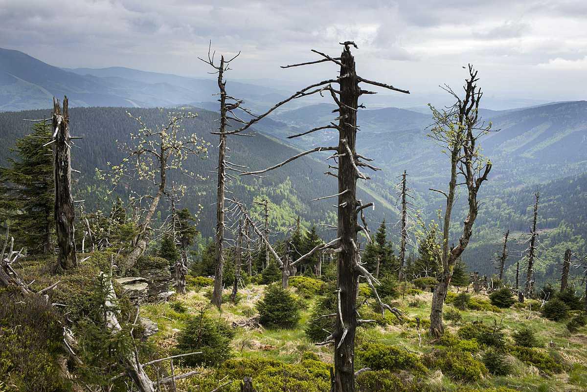 Der Traum vom Urwald