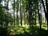 Kein Wald für Polen