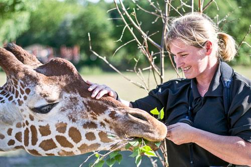 Vor den Giraffen brauchen sich Besucher nicht zu fürchten.
