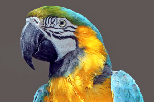 Das Land der billigen Papageien