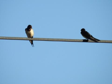 branch-bird-wing-beak-power-line-fauna-537638-pxhere.com