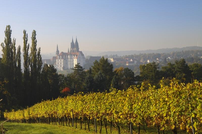 landscape-tree-vineyard-wine-field-morning-1035000-pxhere.com